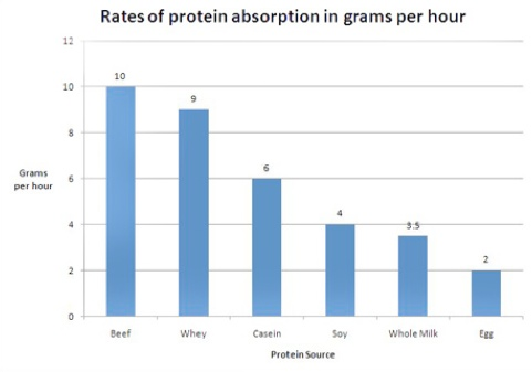 rates of protein absorption in grams per hour